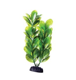 Aquaria UT PP GREEN BACOPA 8IN