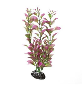 Aquaria UT PP PURPLE/GREEN LUDWIGIA 8IN