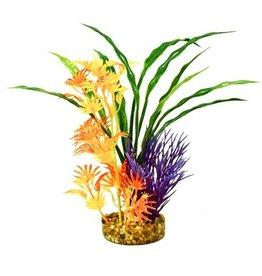 Aquaria (D) FIESTA AQUA HAWAII - MULTI PLANT