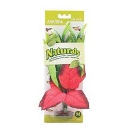 Aquaria (W) MA Ntl Red&Grn Pickerel Silk Plant,Med