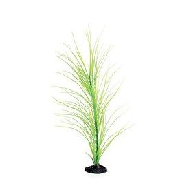 Aquaria UT PP GREEN HAIRGRASS 20IN