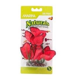 Aquaria (W) MA Ntl Red Foreground Silk Plant