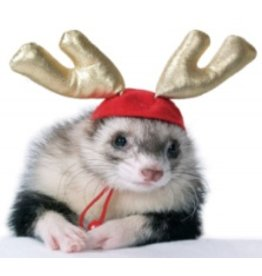 Small Animal (W) Holiday Antlers
