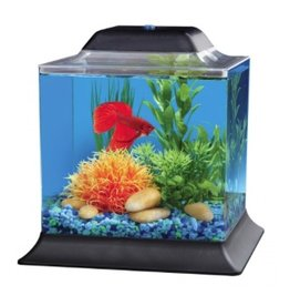 Aquaria (D) API Betta Cube Aquarium Kit - 1.5 gal