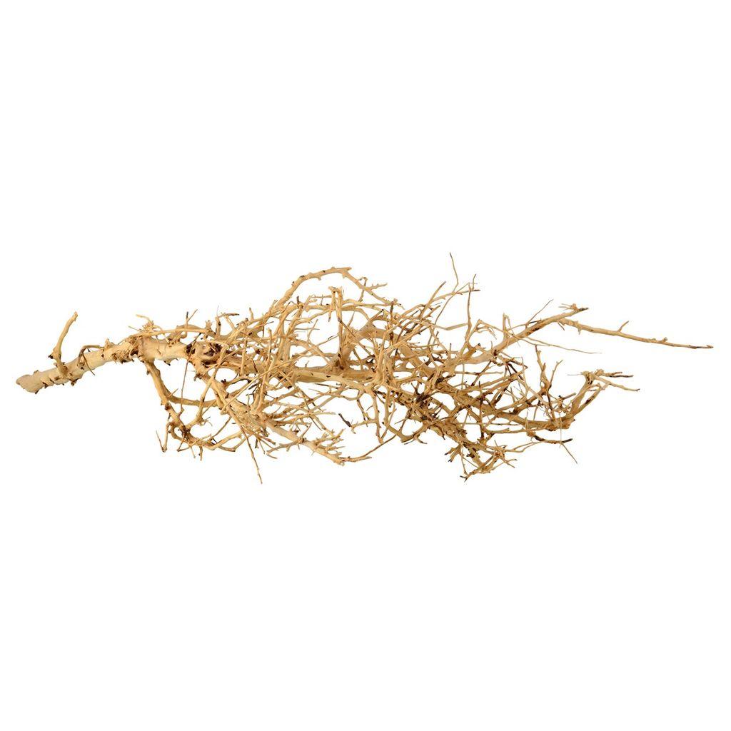 Aquaria (W) Bird Nest Wood - Medium