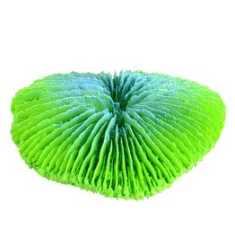 Aquaria Plate Coral - Green - Mini
