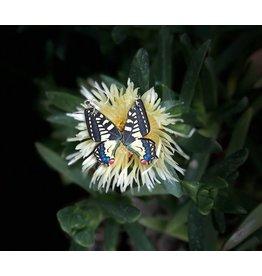 Green Tree Earrings Wood-Swallowtail Butterfly