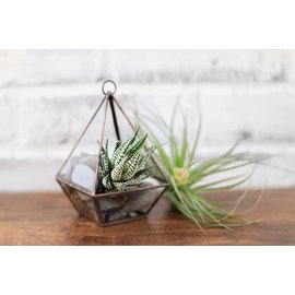lex + bd Hanging Glass Terrarium