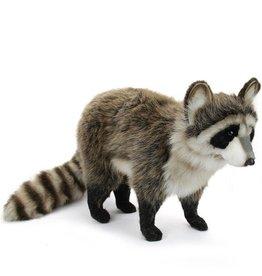 Hansa Hansa Raccoon, Standing