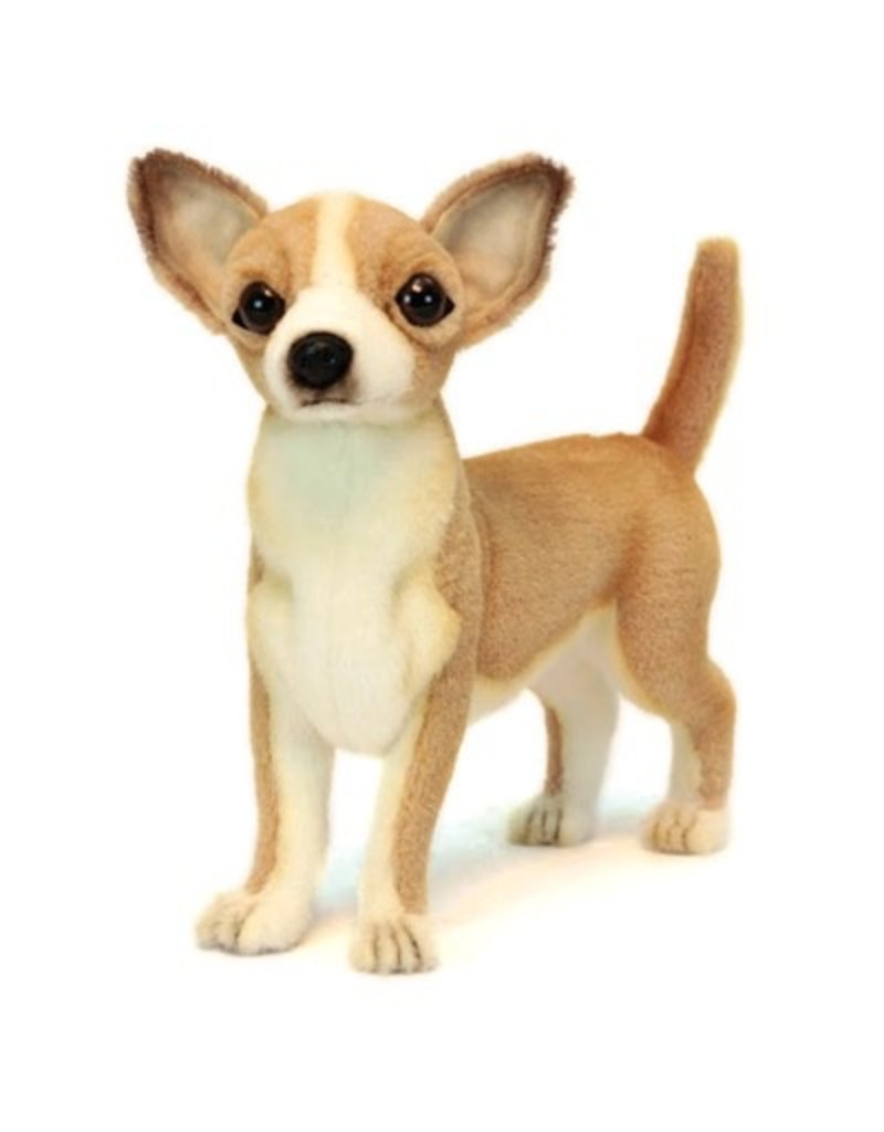 Hansa Hansa Chihuahua