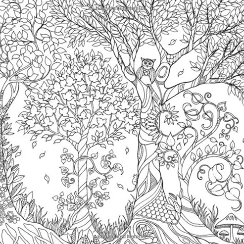 HACHETTE MUDPUPPY JOHANNA BASFORD ENCHANTED FOREST COLORING BOOK