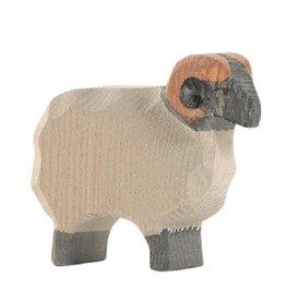 Ostheimer Sheep - Moorland Ram