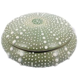 HomArt California Design House Decorative Sea Urchin Ceramic Bowl 7x2.5  Light Seafoam