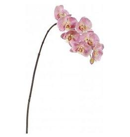 Winward Flowers Flowers 95162.HP Orchid Phalaenopsis x7 Hot Pink