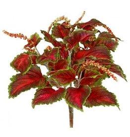 Winward Flowers Floral 53120.BURG Coleus