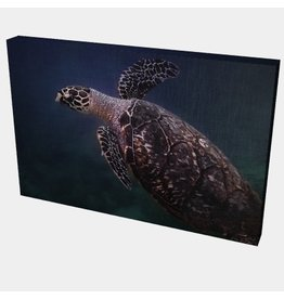 Charles W Gallery Wrapped Canvas Wall Art Print 003 Sea Turtle