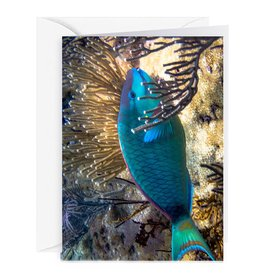 Charles W Blank Note Card - Cash - Gift Card Holder - Parrot Fish