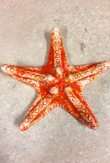 Rare Earth Gallery Starfish (Md)