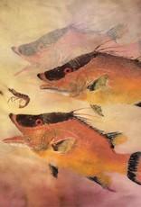 Ken Dara Singles (Asstd. Fish, Gyotaku Giclee, 5x7, Matted, Framed, Signed)