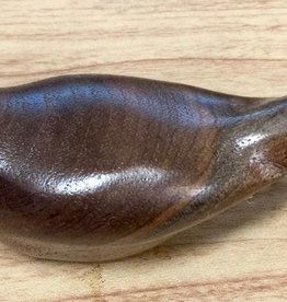 William Lohnes Warbler, Black Walnut (#4549)