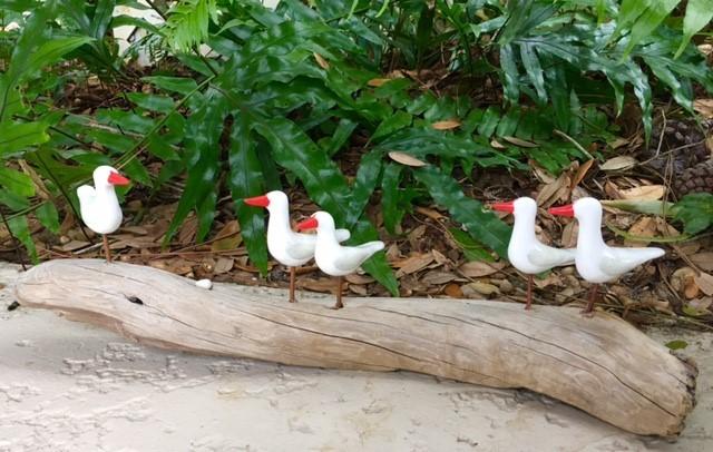 5 Red Beaked Skimmers (#1704)
