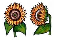 Rare Earth Gallery Earrings, Sunflower