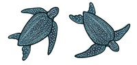 Rare Earth Gallery Earrings, Sea Turtle, Leatherback