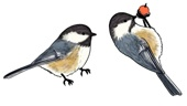 Rare Earth Gallery Earrings, Chickadee, Black-Capped