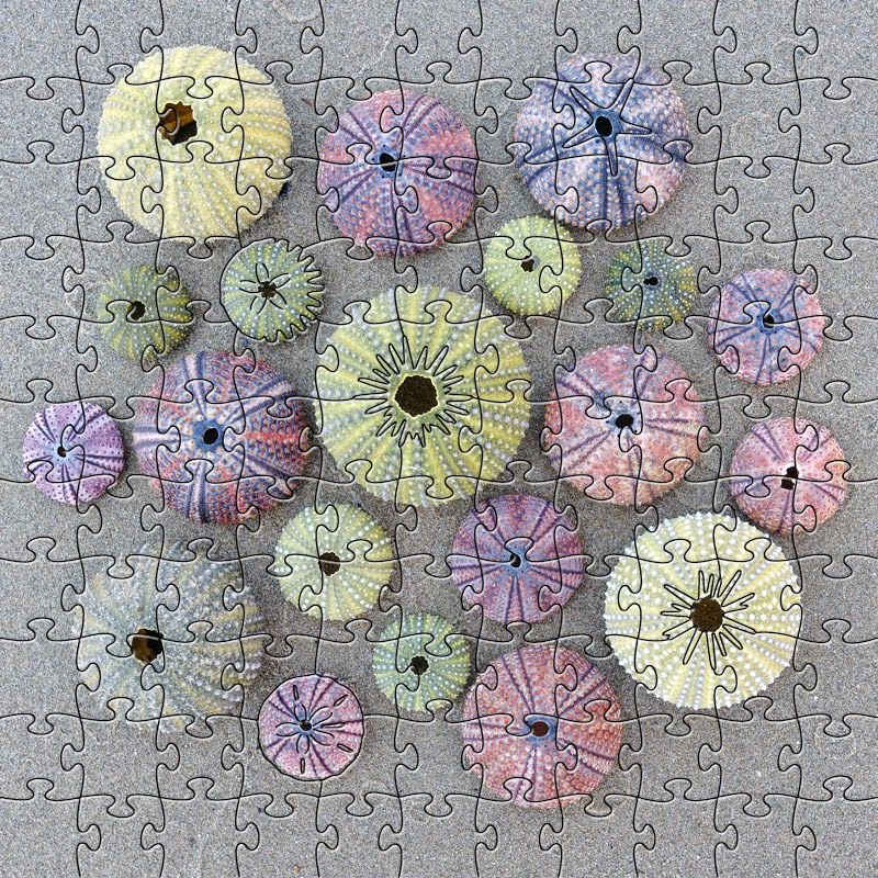 Rare Earth Gallery Sea Urchins (Sm, 125 Pieces, Artisanal Wooden Jigsaw Puzzle)