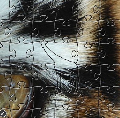Rare Earth Gallery Tiger Eye (Teaser, 50 Pieces, Artisanal Wooden Jigsaw Puzzle)