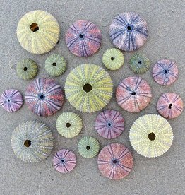 Rare Earth Gallery Sea Urchins (Teaser, 50 Pieces, Artisanal Wooden Jigsaw Puzzle)