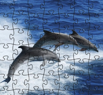 Rare Earth Gallery Dolphins (Teaser, 50 Pieces, Artisanal Wooden Jigsaw Puzzle)