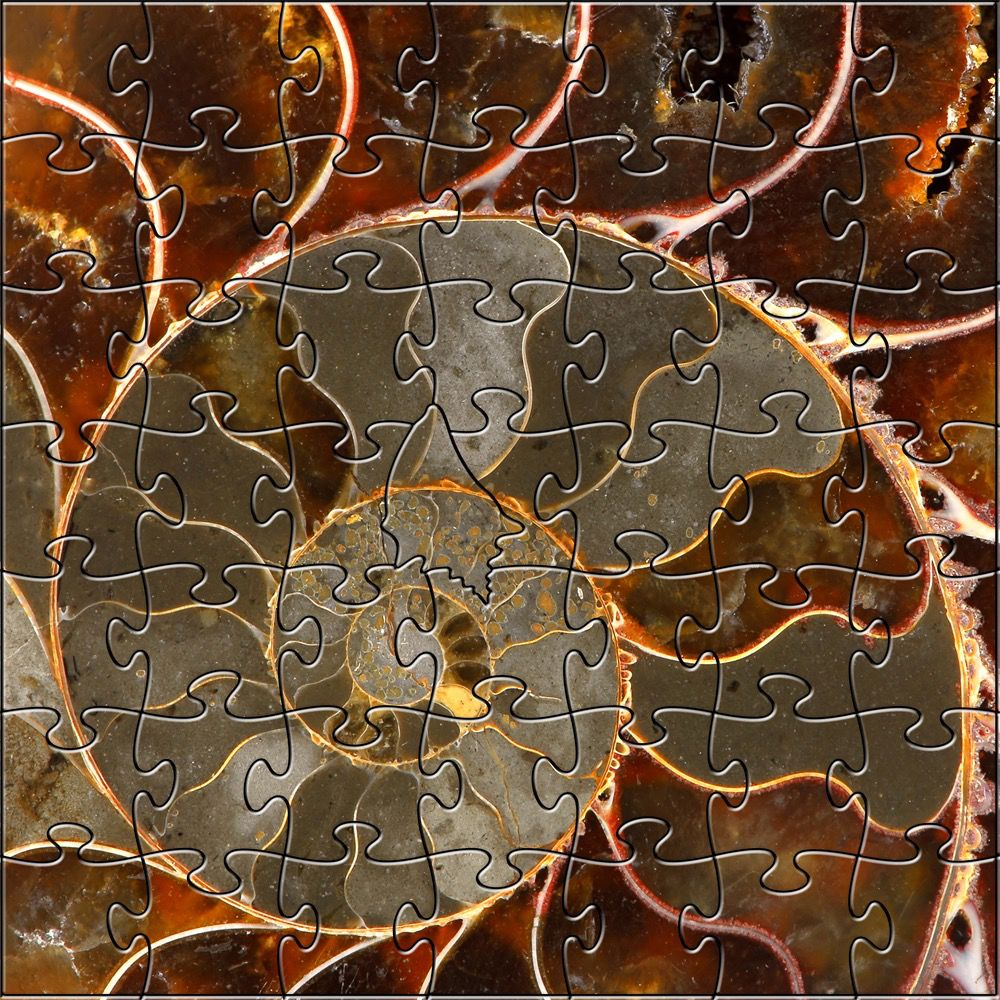 Rare Earth Gallery Ammolite (Teaser, 50 Pieces, Artisanal Wooden Jigsaw Puzzle)