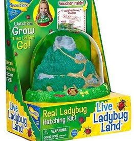Live Lady Bug Land