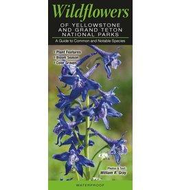 Wildflowers of Yellowstone & Grand Teton National Parks