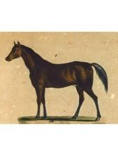 JOHN DERIAN John Derian Horse Postcard