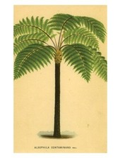 JOHN DERIAN John Derian Palm Postcard