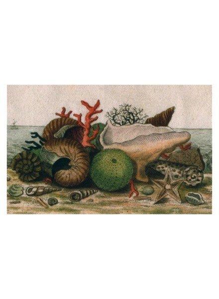 JOHN DERIAN John Derian Shells Postcard