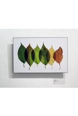Fine Art Five Leaves 11x17 float mount by Andrea Dunn