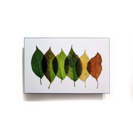 Five Leaves 11x17 float mount by Andrea Dunn