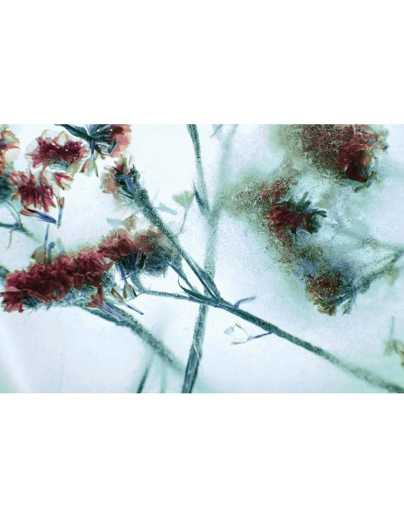 "Heather Monks ""Limonium - Statice Flower"" by Heather Monks"
