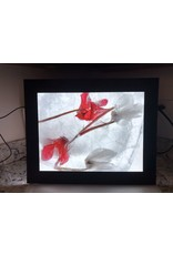 """Heather Monks """"Cyclamen Abchasicum - Red Cyclamen - Light Box"""" by Heather Monks"""
