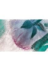 "Heather Monks ""Paeonia suffruticosa - Peony"" by Heather Monks"