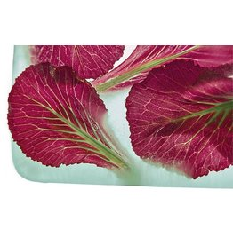 "Heather Monks ""Brassica oleracea - Decorative Cabbage"" by Heather Monks"