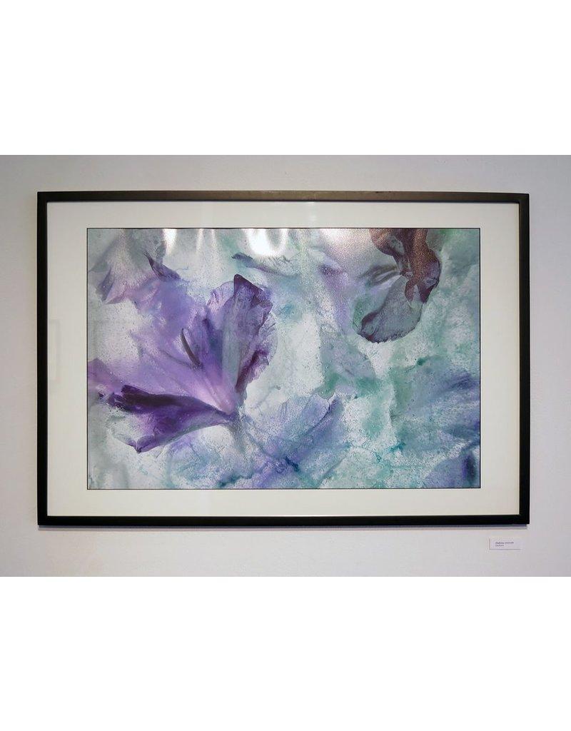 "Heather Monks ""Gladiolus communis - Gladiolus in Ice"" by Heather Monks"