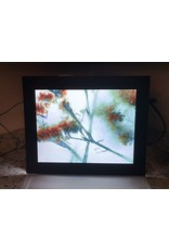 "Heather Monks ""Limonium - Statice Flower - Light Box"" by Heather Monks"