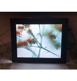 "Heather Monks ""Limonium - Statice Flower - Light Box"" by Heather Monks"