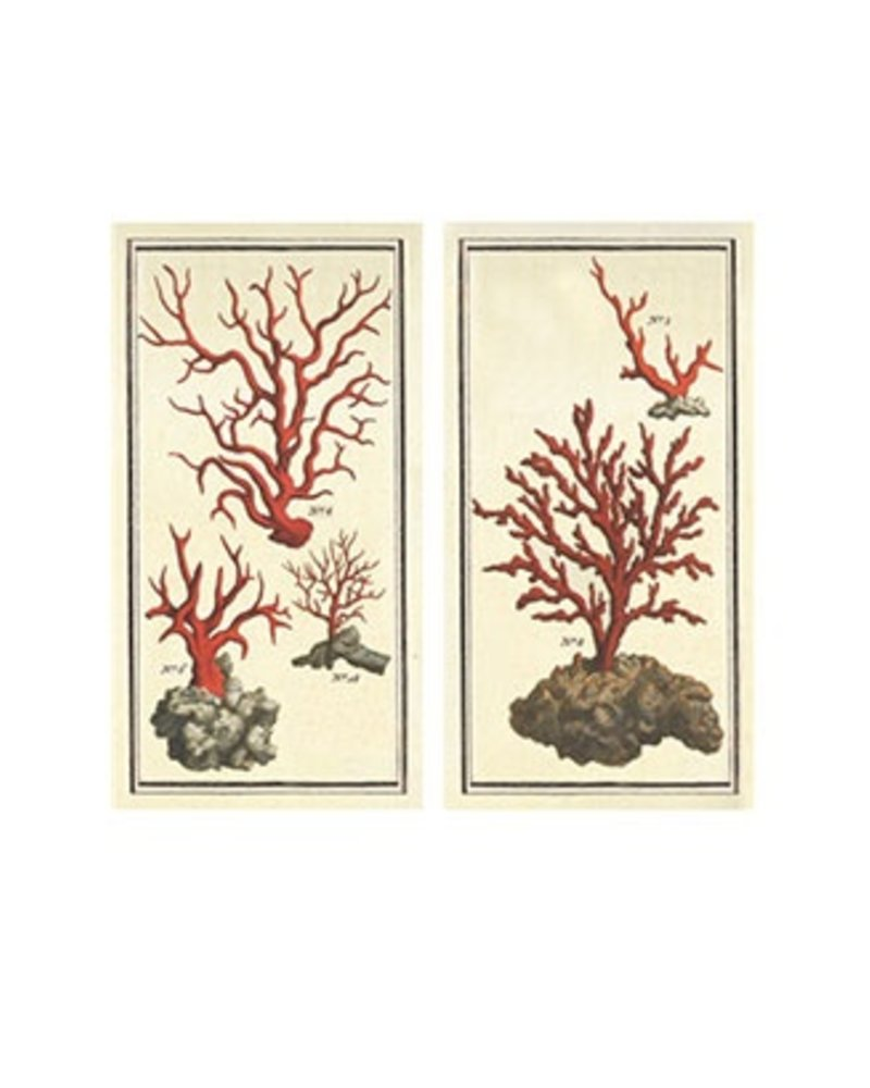 Big Match Book - tidepool Coral