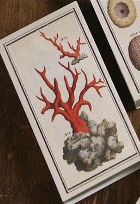 Big Match Book - tidepool Coral