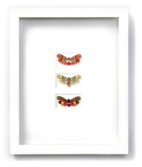 11 x 14 Planthopper Trio in White